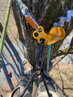 tree climber climbing tree with gear